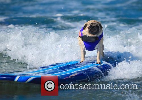 Surf Dog Surf-a-thon 4
