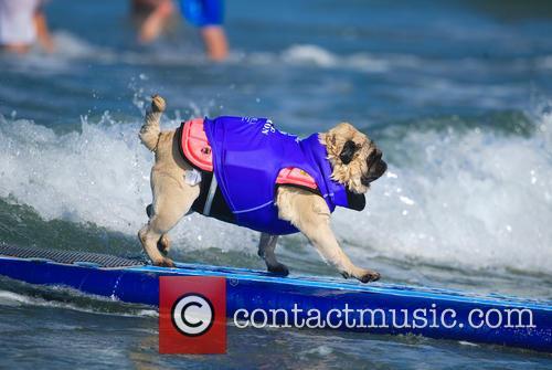 Surf Dog Surf-a-thon 5