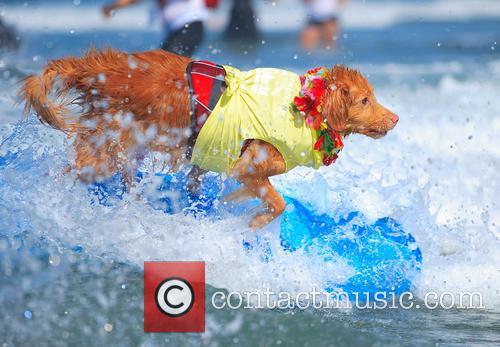 Surf Dog Surf-a-thon 7