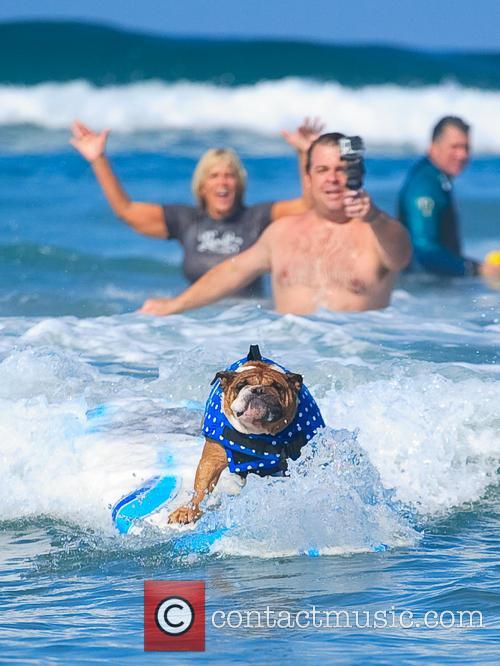 Surf Dog Surf-a-thon 9