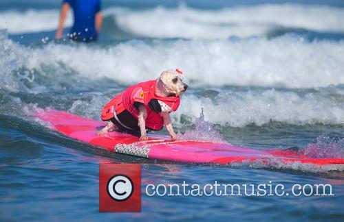 Surf Dog Surf-a-thon 10
