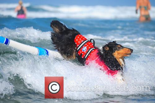 Surf Dog Surf-a-thon 11