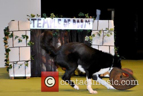 National Pet Show 2014
