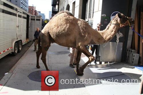 David Letterman and Camel 6