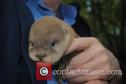 Baby Otters At Newquay and Zoo 2