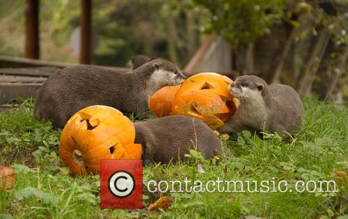 Otters 3