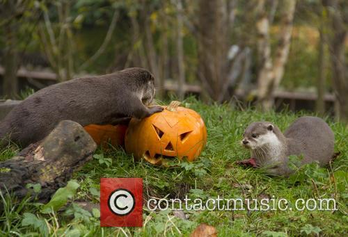 Otters 5