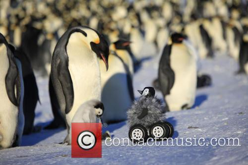 Fake Penguin Chick Rover