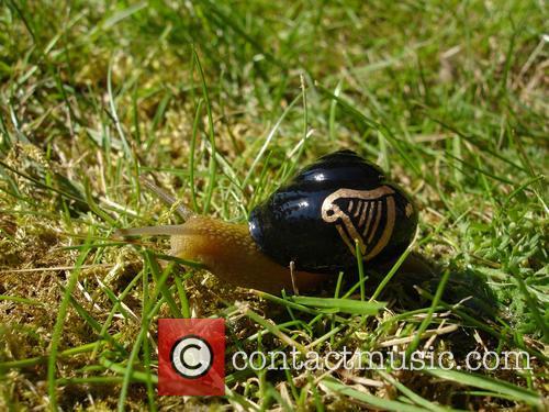 Guinness Snail 1