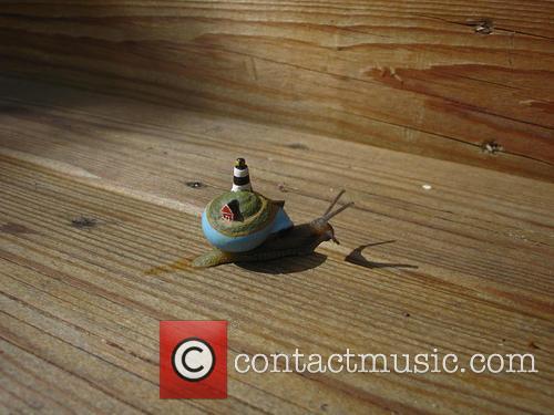 Island Snail 1