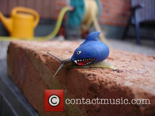 Shark Snail 1