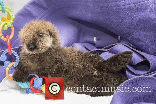 Rescued Otter 6