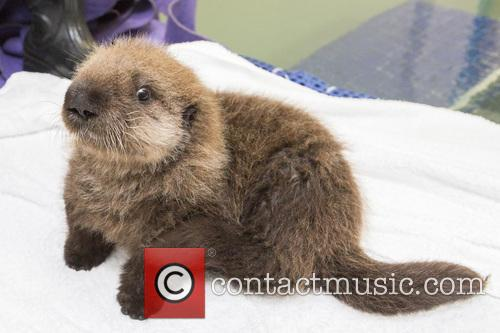 Rescued Otter 1