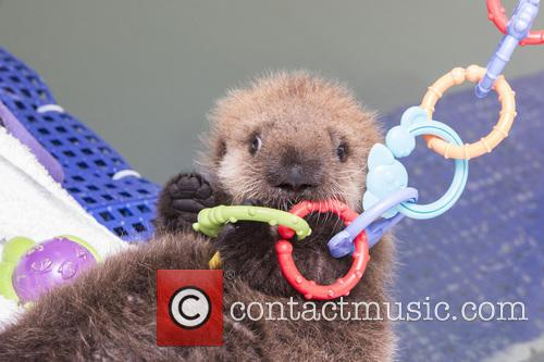 Rescued Otter 7