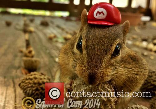 Squirrel Cam 2