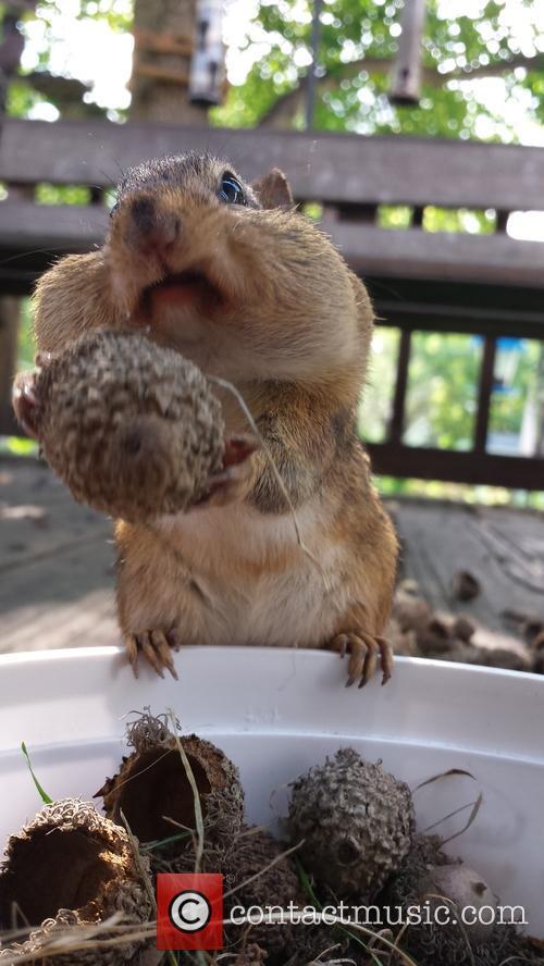 Squirrel Cam 3