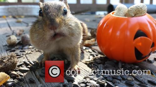 Squirrel Cam 5