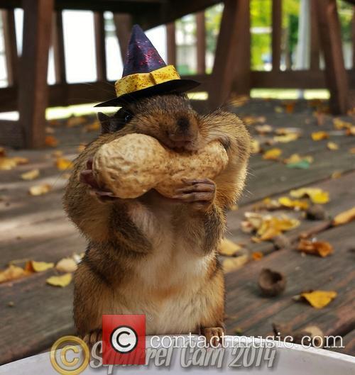 Squirrel Cam 6