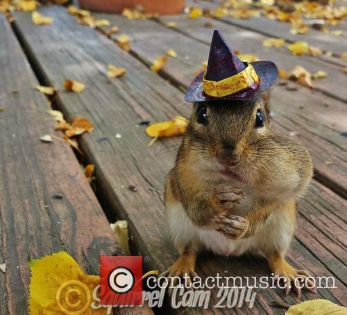 Squirrel Cam 7