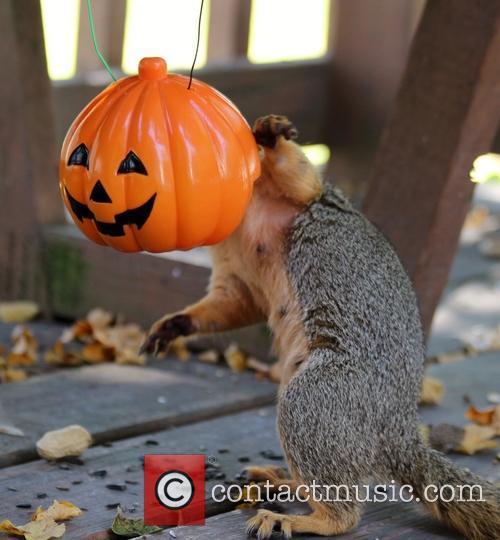 Squirrel Cam 11