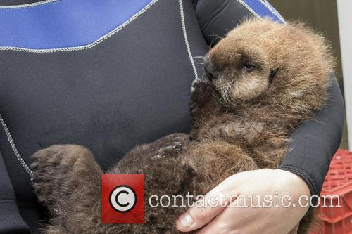 Otterly Adorable Sea Pup, Gets Live On Air and Session 2