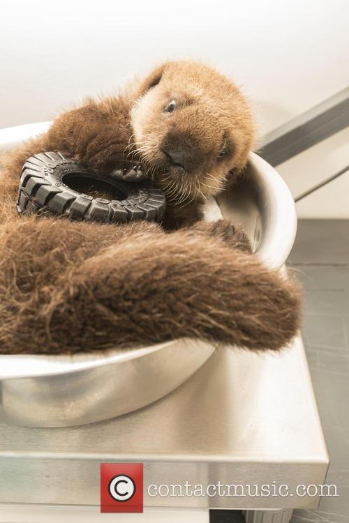 Otterly Adorable Sea Pup, Gets Live On Air and Session 3