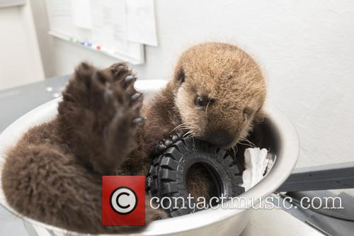 Otterly Adorable Sea Pup, Gets Live On Air and Session 4