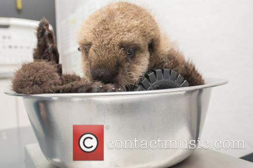 Otterly Adorable Sea Pup, Gets Live On Air and Session 5