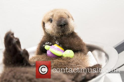 Otterly Adorable Sea Pup, Gets Live On Air and Session 6