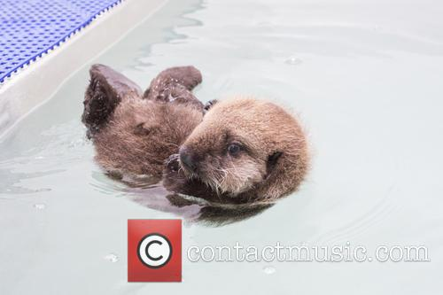 Otterly Adorable Sea Pup, Gets Live On Air and Session 7