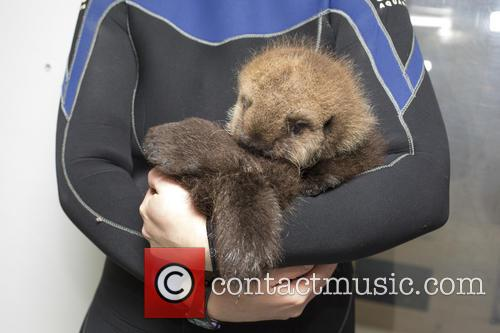Otterly Adorable Sea Pup, Gets Live On Air and Session 8