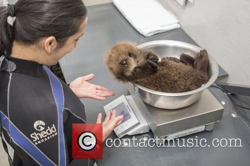 Otterly Adorable Sea Pup Gets Live On Air...
