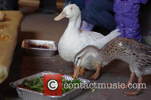 Thanksgiving For Turkeys 3