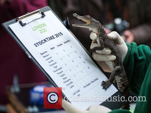 Stock and Philippine Crocodile 11