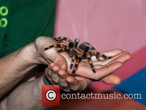 Stock and Tarantula Spider 1