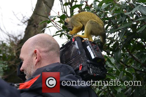 Cameraman and Black-capped Squirrel Monkey 1
