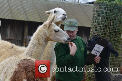 Zookeeper, Alpaca and Llamas 2