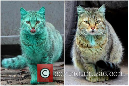 Bulgaria's famous green cat gets a wash!