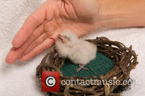 First Tawny Frogmouth Chick, Year Hatches and Seaworld Orlando 2