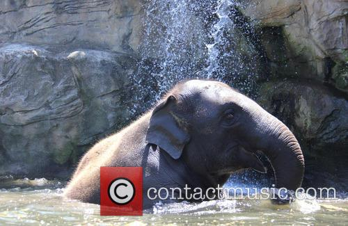 Elephants Beat The Heat and Under The Waterfall 4