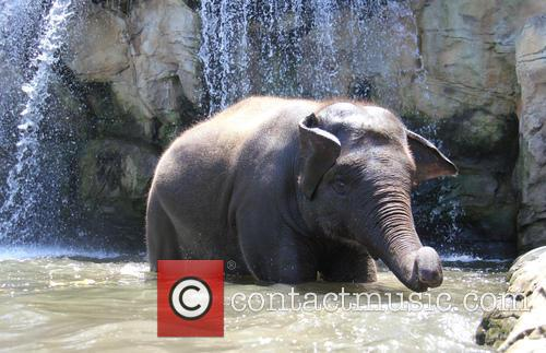 Elephants Beat The Heat and Under The Waterfall 7