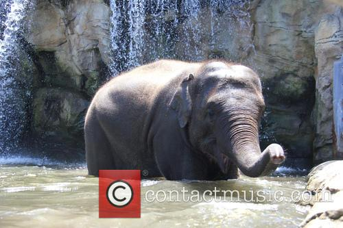 Elephants Beat The Heat and Under The Waterfall 8