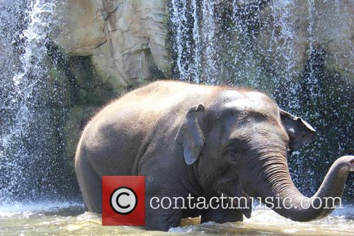 Elephants Beat The Heat and Under The Waterfall 9