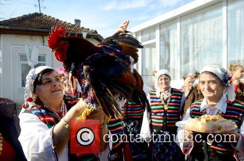 Bulgaria Rooster Day