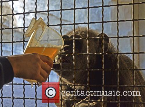Chimp's Winter Warmer Broth 2