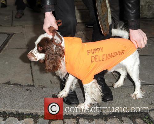Puppy Delevingne 4