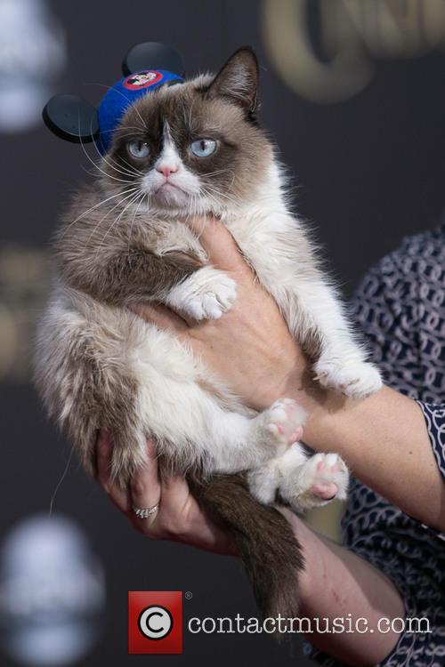 Grumpy Cat 1