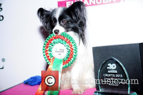 Emily High, Anton (papillon) and Advanced Freestyle Heelwork To Music Winner 1