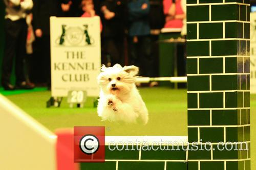Young Kennel Club Agility Dog Of The Year 2