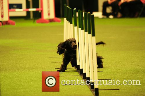 Young Kennel Club Agility Dog Of The Year 1